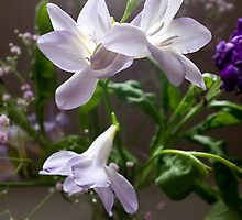 Lilies by Mike Crawford