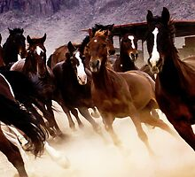 Stampede by Linda Gregory