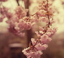 Ornamental Cherry Blossom by AliceSnaps