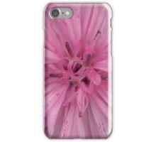 pink cornflower iPhone Case/Skin