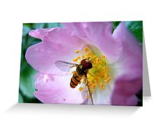 Pink Insect Greeting Card