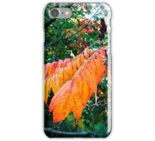 autumn leaves I iPhone Case/Skin