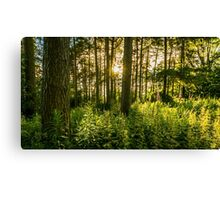 Yorkshire woodland dappled in evening sunshine Canvas Print