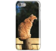 Ginger cat howling on garden fence iPhone Case/Skin