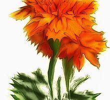 Glorious Marigolds by CarolM