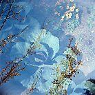 Marigold by Vanessa Prestage