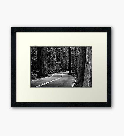 Avenue of the Giants  Framed Print