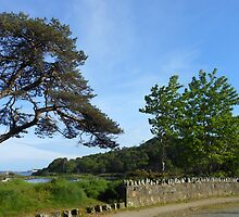 A Summer's Evening in Stornoway by BlueMoonRose