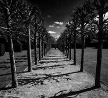 Avenue of Shadows by Lee  Gill