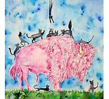PINK BISON and BLACK CATS Photographic Print