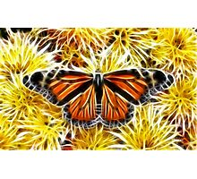 Butterfly on Flowers (detailed) Photographic Print