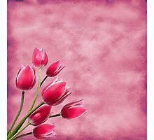 Pink Tulips Photographic Print