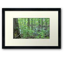 Detroit Swamp - Palmer Park Framed Print