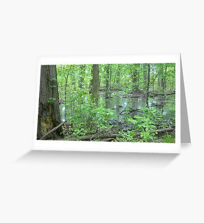 Detroit Swamp - Palmer Park Greeting Card