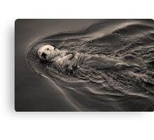 Sea Otter I Toned Canvas Print