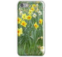 Mixed Daffodils  iPhone Case/Skin