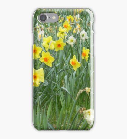 Mixed Daffodils  iPhone Case/Skin