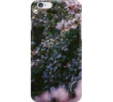 Rainbow Bush at Sunset iPhone Case/Skin