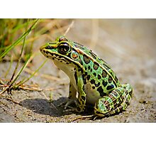 Leopard Frog Looking For A Snack Photographic Print