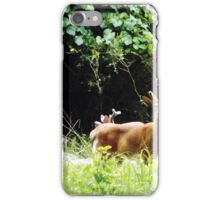Princess Plantation 19 iPhone Case/Skin