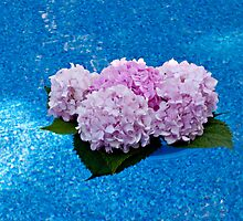 Hydrangeas Floating in the Pool by Sherry Hallemeier