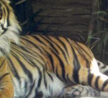 Tiger Smirk Sticker