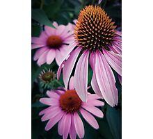 Flower 31 Photographic Print