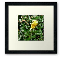 Yellow Rosebud Framed Print
