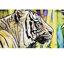 Tiger numero quatro Photographic Print
