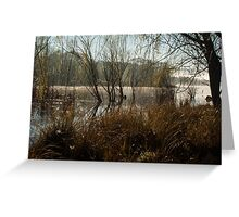 Amongst the Reeds and Rushes - Lake Wallace, Wallerawang NSW Greeting Card