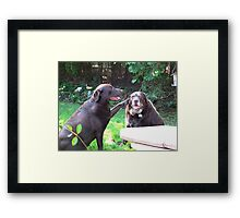 Lab loyalty Framed Print