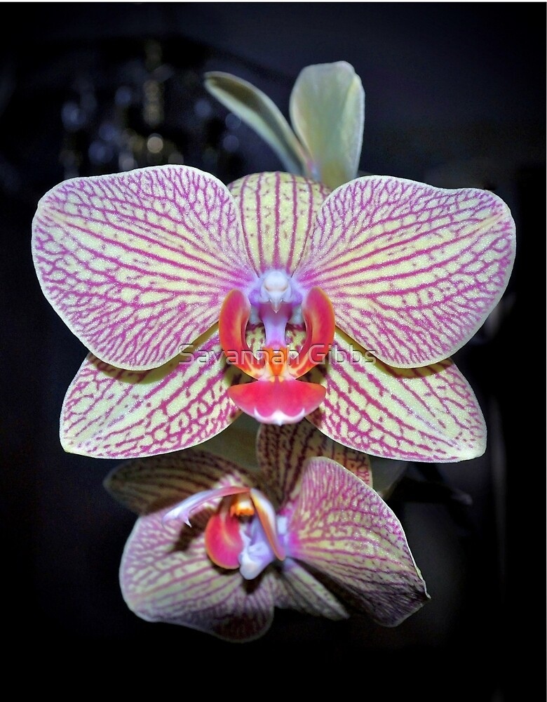 Orchids  by Savannah Gibbs