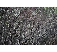 Sea Of Branches By Matthew Lys Photographic Print