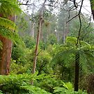 Tarra Bulga bushland by Peter Krause