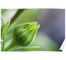 Fully Closed Bud 2/5 Poster