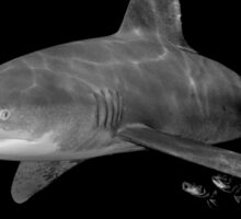 An Oceanic White Tip Shark and Pilot Fish in Black and White Sticker