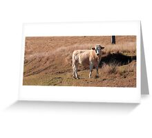 Cow in the country Greeting Card
