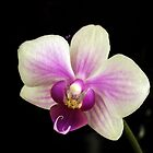 Smiling Orchid by Barbny