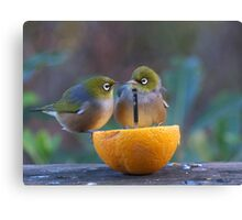 Love is.......Two on an orange......! Canvas Print