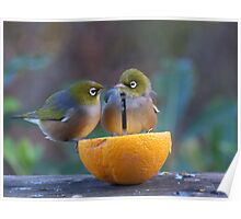 Love is.......Two on an orange......! Poster