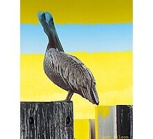 Pelican Place Photographic Print