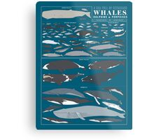 A SEA FULL OF CETACEANS: WHALES, DOLPHINS, AND PORPOISES Metal Print