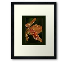 The Crying Orchid Framed Print