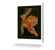 The Crying Orchid Greeting Card