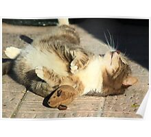 Tabby cat playing with toy mouse Poster