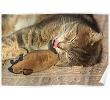 Tabby cat with toy mouse licking lips Poster