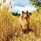 Lassie in the Country by BellatrixBlack