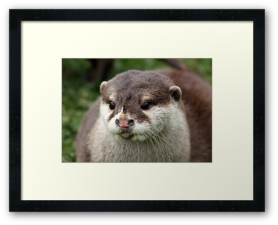 Otter by AnnDixon