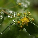 After Rain by Ursula Rodgers