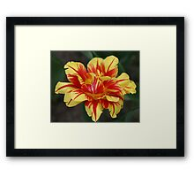 Monsella Double Tulip Framed Print